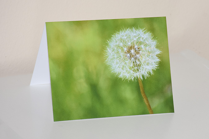 dandelion seeding greeting card by brithikesontario