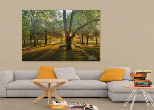thompson memorial park dawn in living room